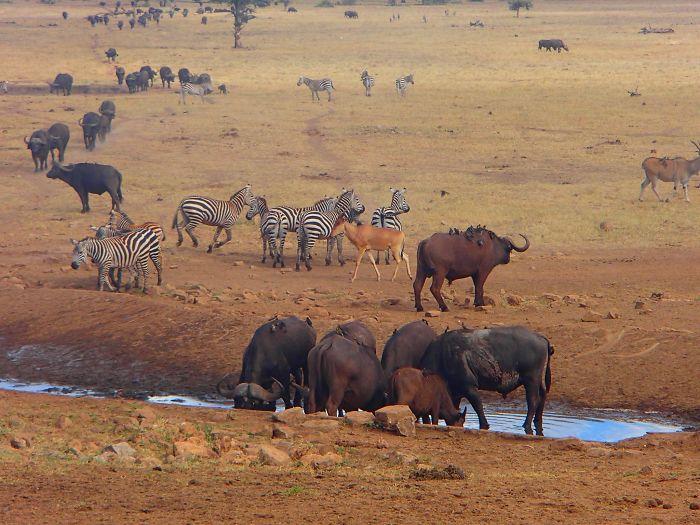 Дикие животные страдают от засухи