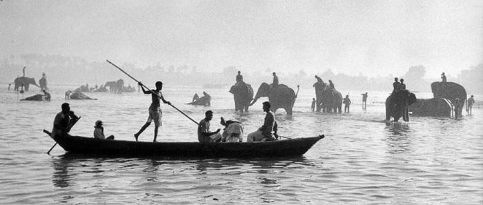 Индия, 1956 год. Купание слонов в Ганге