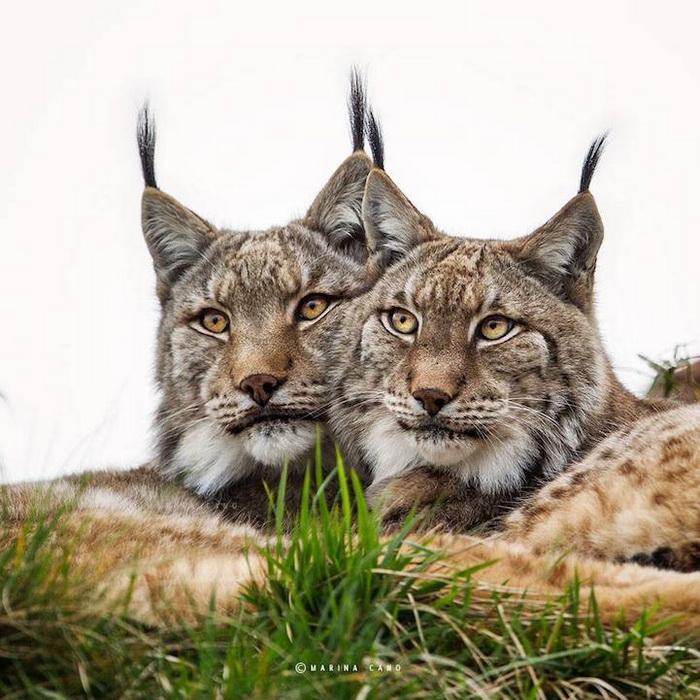 Фотографии диких животных от Марины Кано (Marina Cano)