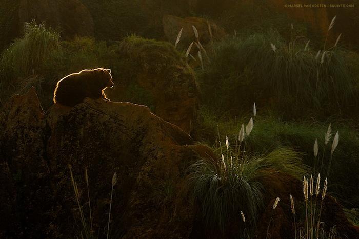 Очаровательный медвежонок на фотографии Марселя Ван Остена