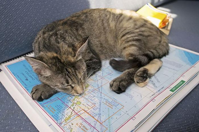 Кот Джорджи - полноценный член экипажа