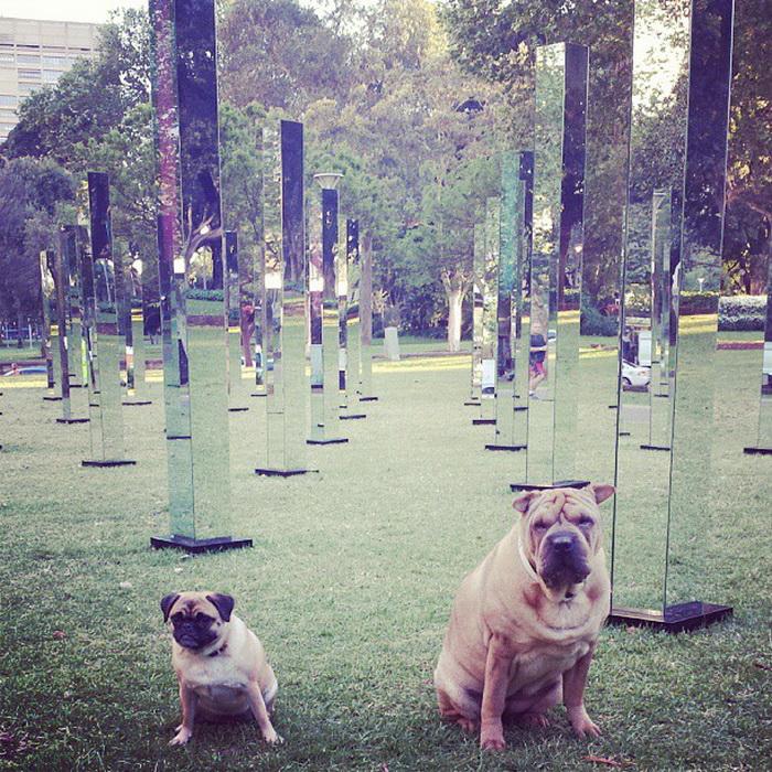 Зеркальный лабиринт в Гайд-Парке (Сидней)
