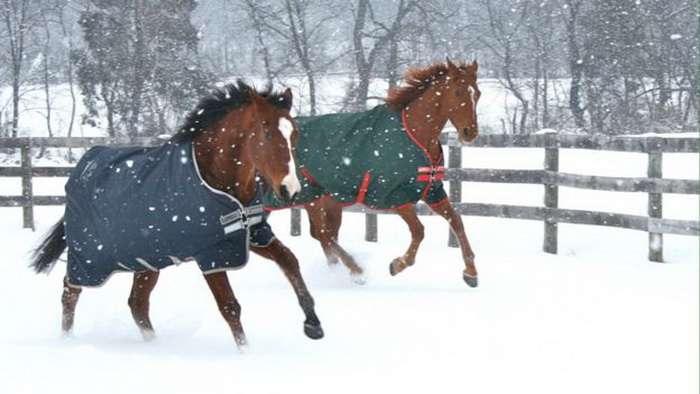 Метро (слева) на зимней прогулке.