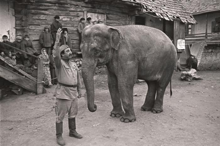 Солдат и слон, кадр из фильма