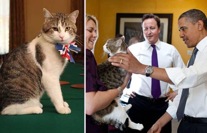 Почетные Коты-Мышеловы Британского Королевства.