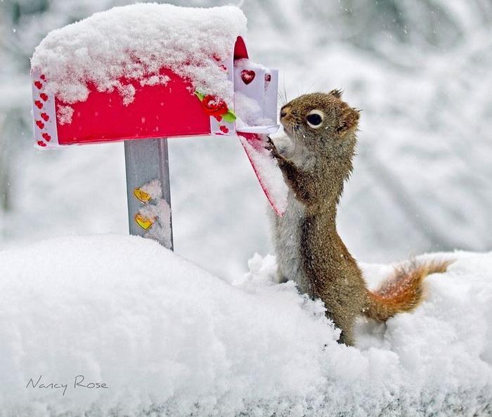 Романтичная фотография ко Дню Святого Валентина от Нэнси Роуз