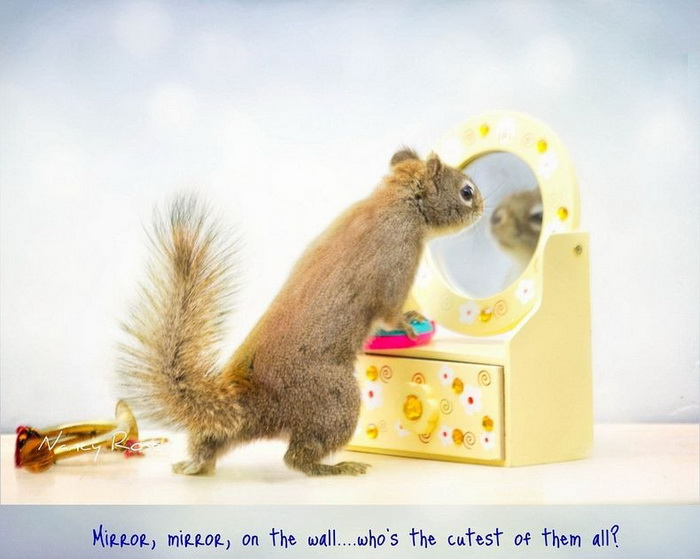 *Свет мой, зеркальце, скажи...* Очаровательные белки на фотографиях Нэнси Роуз