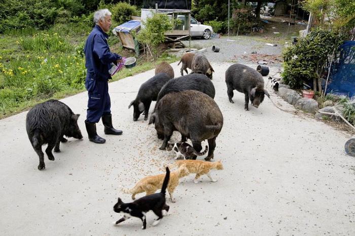 Рискуя здоровьем, японец заботится о животных