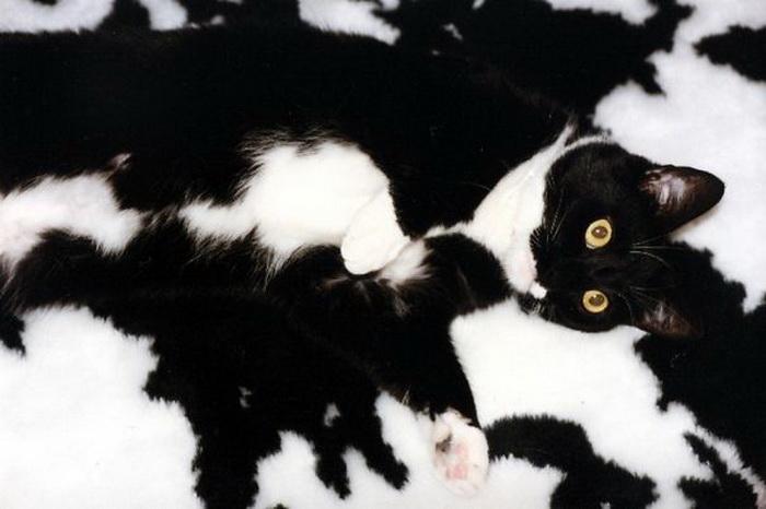 Черно-белый камуфляж