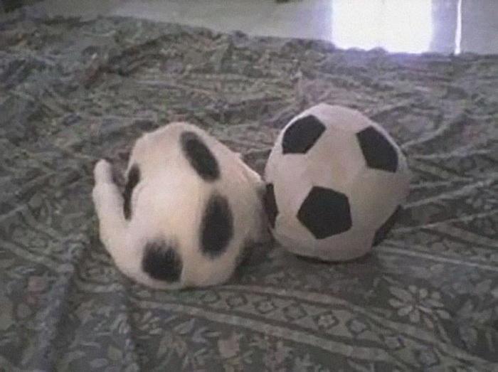 Кот и мяч: главное, не перепутать