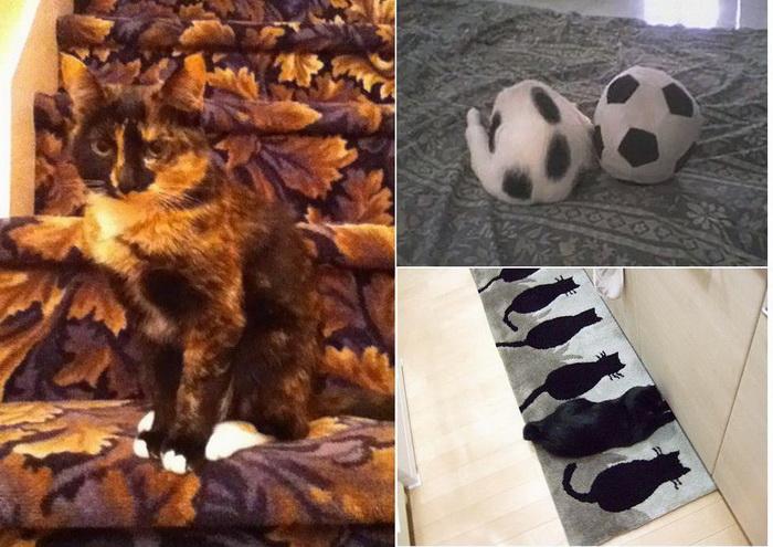 Коты - мастера маскировки