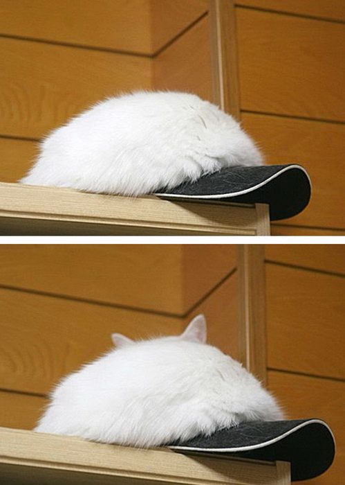 Я шапка, а вовсе не кот