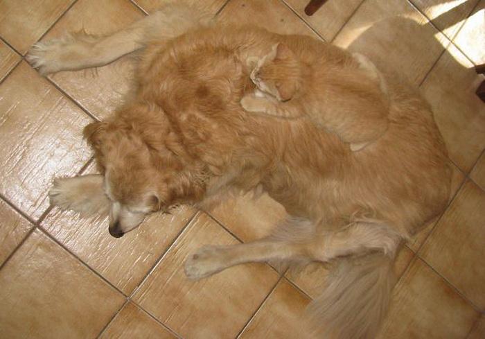 Кот и собака - напарники в маскировке