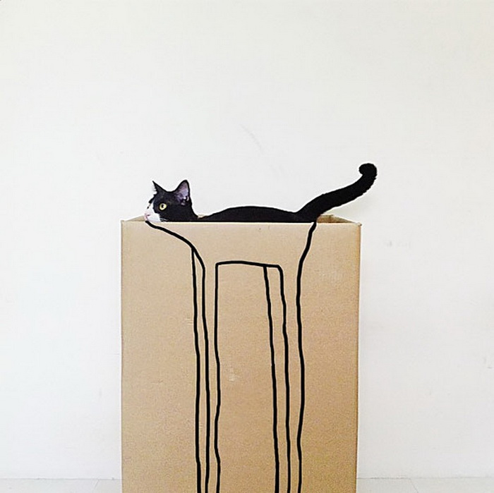 Картонные коробки - любимое место котов