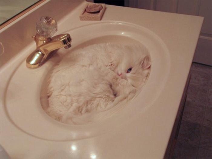 Коты обожают заполнять собой пустоту. Даже в раковине