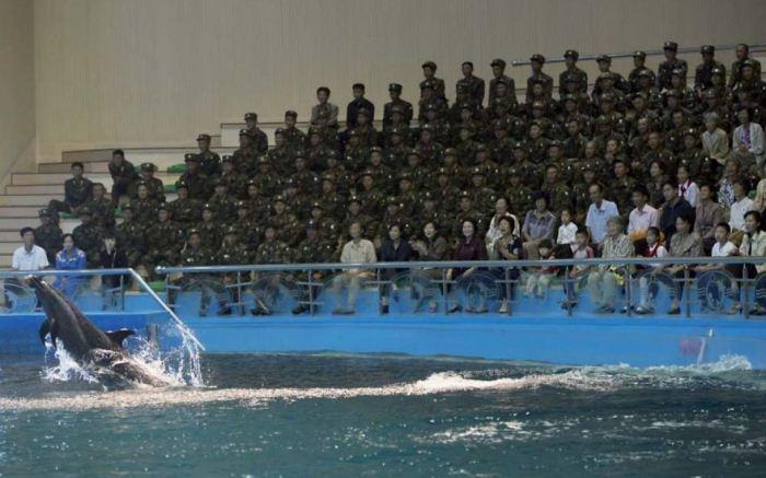 Во время посещения дельфинария можно фотографировать дельфинов, но запрещено делать снимки солдат.