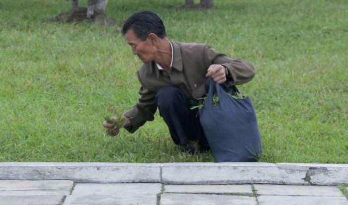 Мужчина собирает траву.