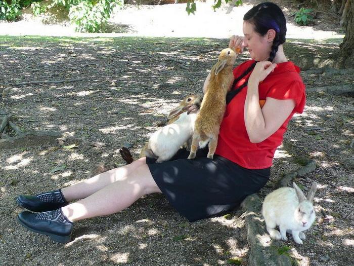 За несколько десятков лет кролики очень привыкли к людям