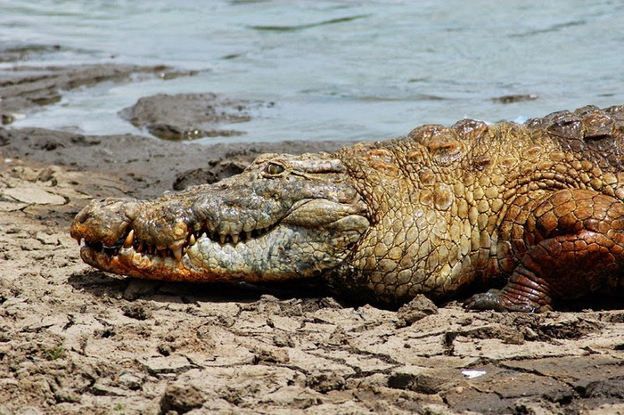 Обитатели Крокодильего пруда