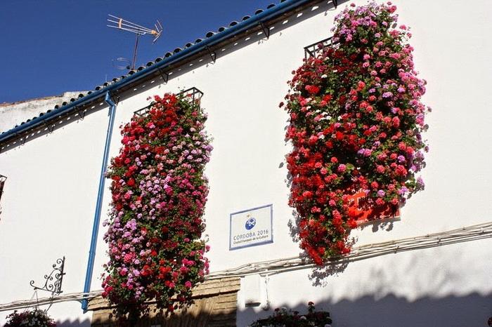Цветочные композиции на окнах домов