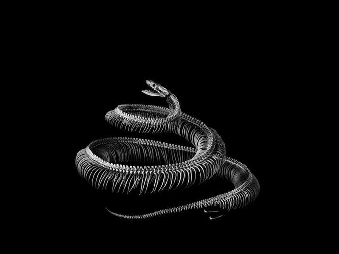 Эволюция: фотоцикл от Патрика Гриса (Patrick Gries)