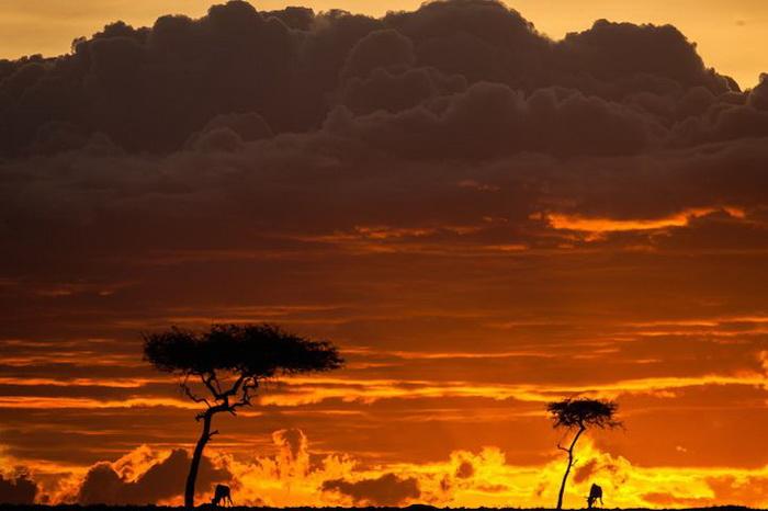 Африканский огонь: фотографии Пола Гольдштейна (Paul Goldstein)