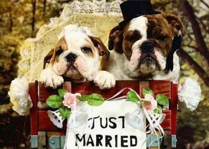 Свадьба для собак