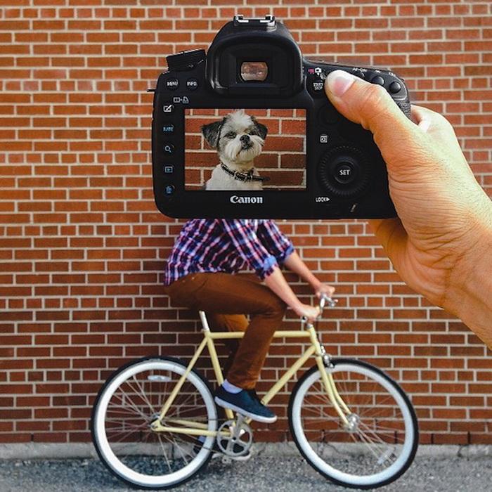 Petheadz: забавный фотопроект о собаках и их хозяевах от Зака Роуза (Zach Rose)