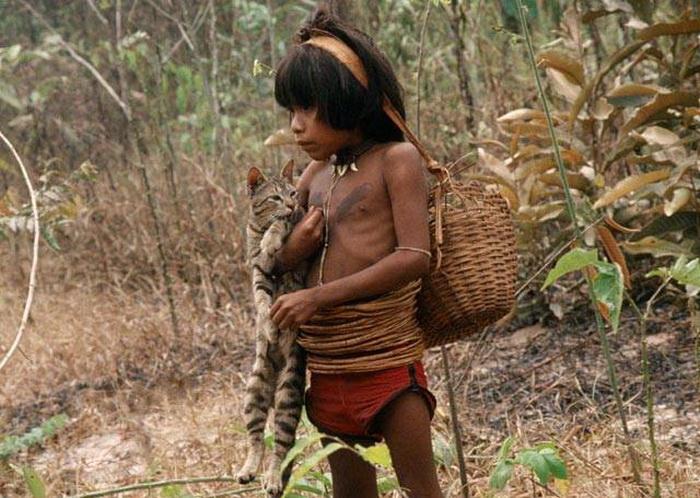 Пираха добывают пищу охотой и собирательством
