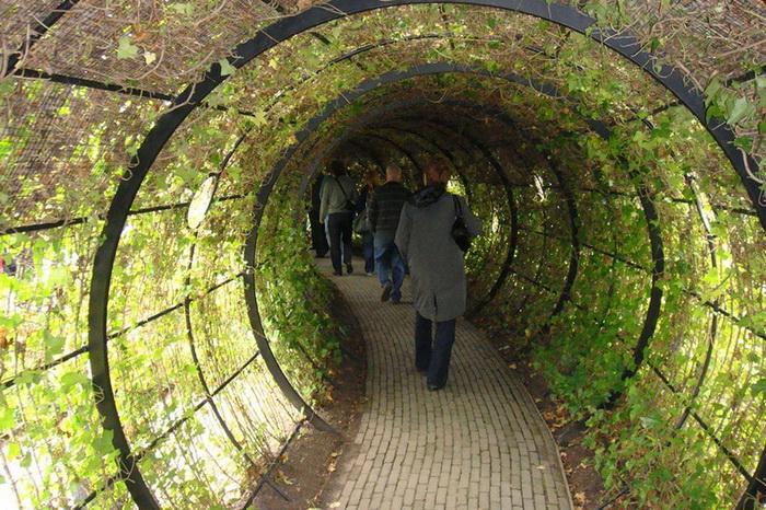 Английский парк Олнвик с ядовитыми растениями