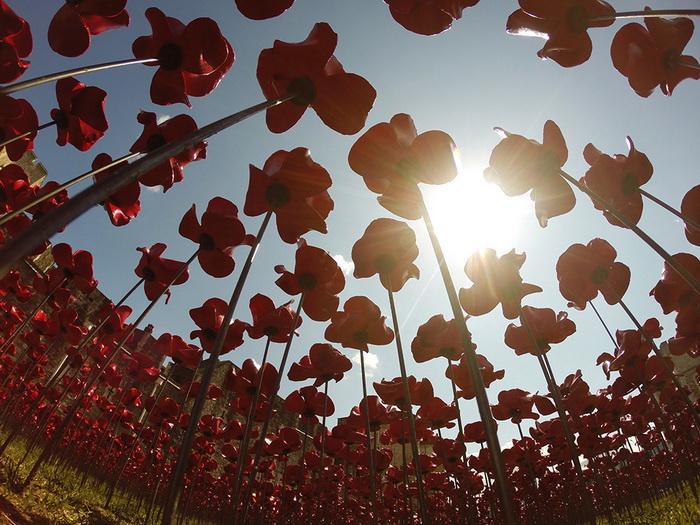 Керамические маки в память о жертвах Первой мировой войны