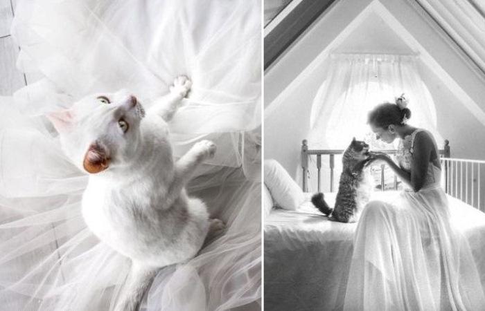Свадебная фотография с котом.