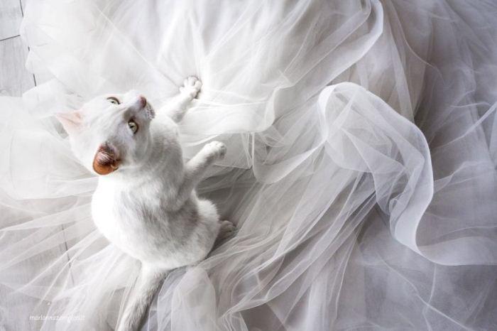 Коты - полноправные участники торжества.