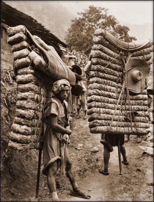 Мужчины с упаковками чая за плечами. С таким грузом весом более 130 кг они нередко преодолевали путь более 100 миль. Сычуань, 1908 г.