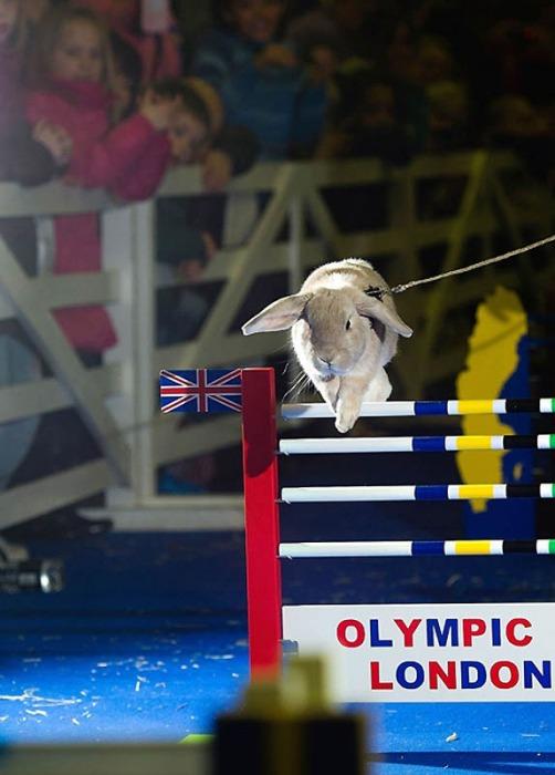 Кроль готовится к прыжку