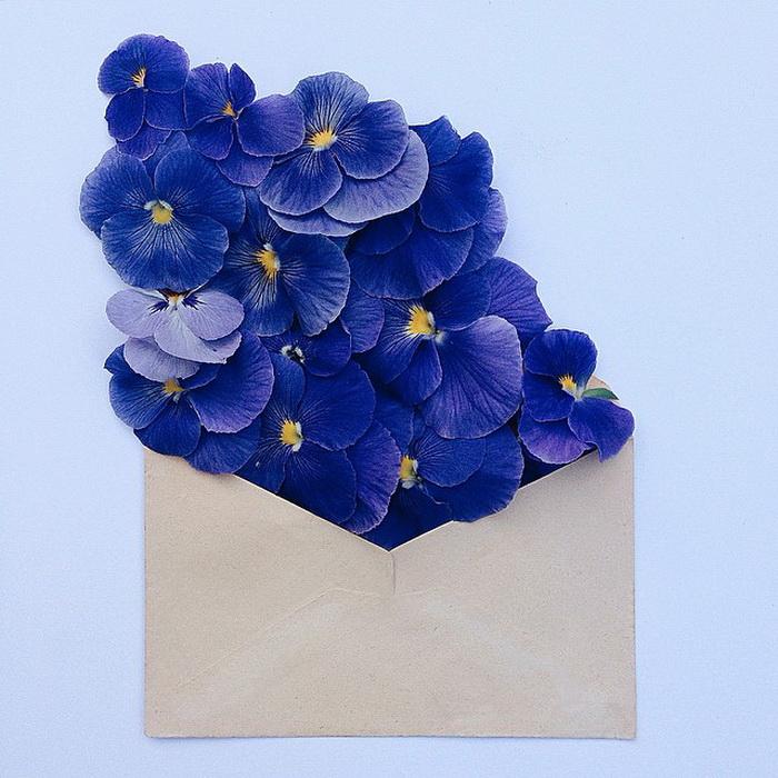 Цветы в конвертах: необычный фотопроект