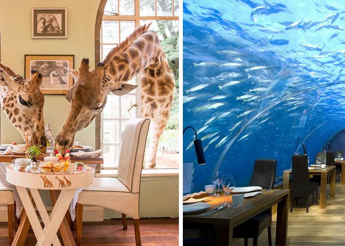 7 самых необычных ресторанов в мире