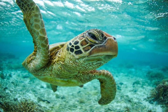 Роберт Ирвин - 13-летний фотограф дикой природы.