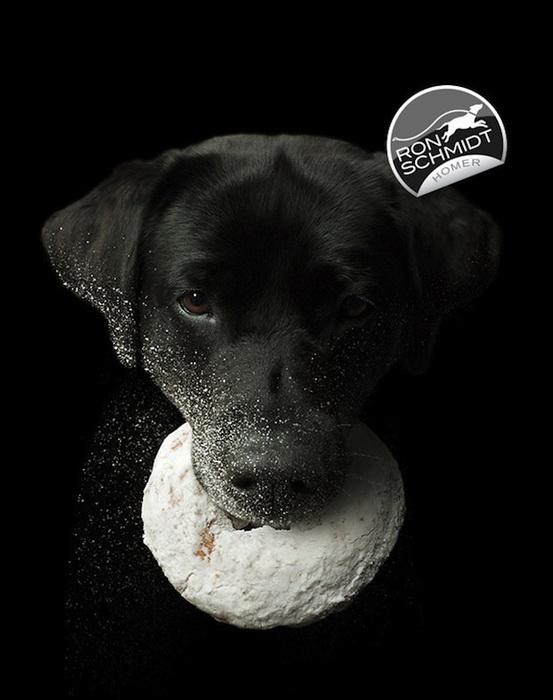 Фотографии собак от Рона Шмидта (Ron Schmidt)