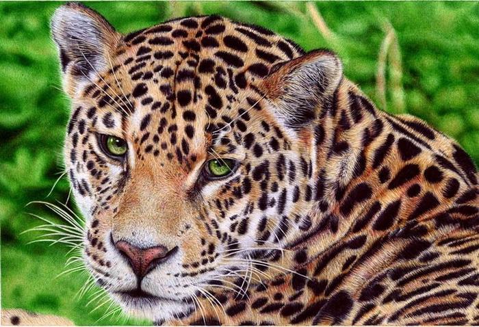 Животные на картинах Самуэля Сильвы выглядят настолько же естественно, как и люди
