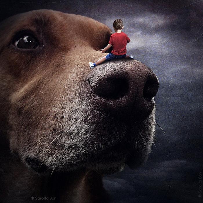 Бездомные собаки на фотоколлажах Шарлоты Бан (Sarolta Bаn)