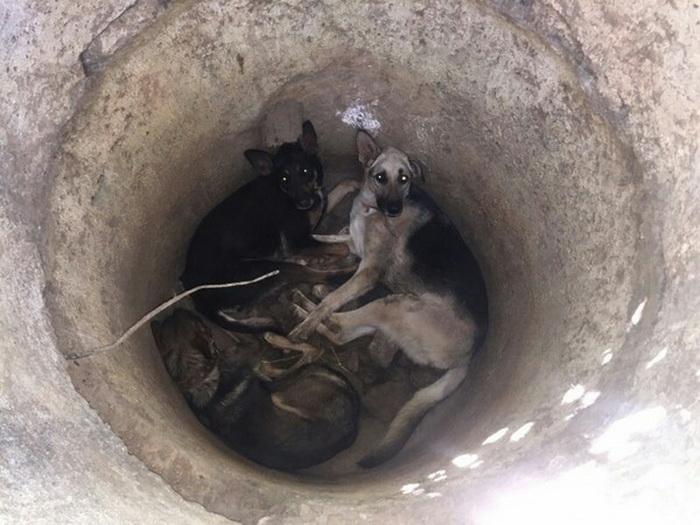 Собаки изнывали от жажды и страдали от голода.