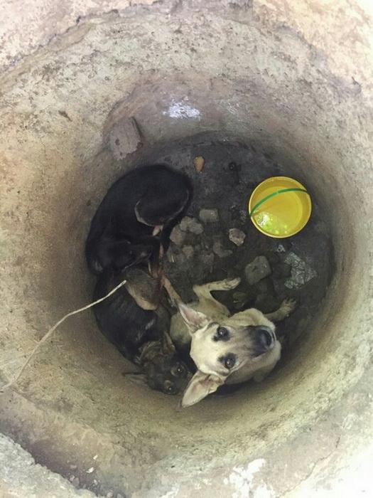 Шансов на спасение у собак не было.