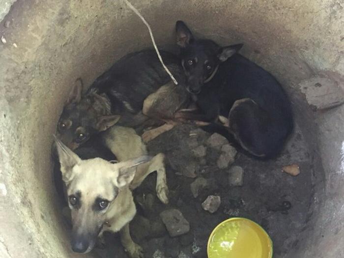 Чудом выжившие псы.