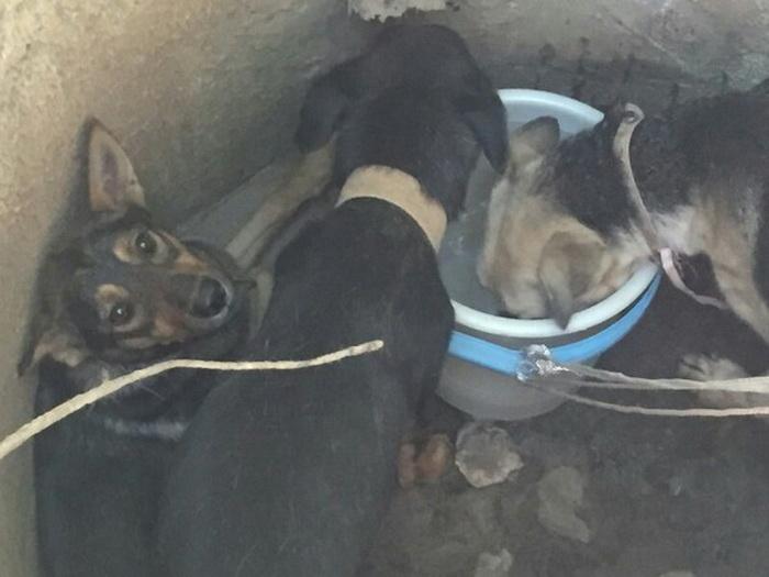 Все три собаки оказались с ошейниками.