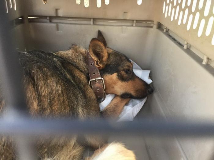 После спасения собак поместили в приют.