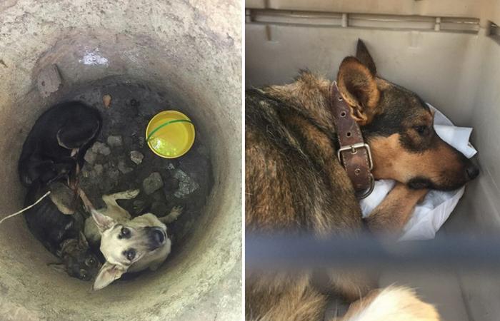 Спасение собак: трех животных обнаружили на дне колодца.