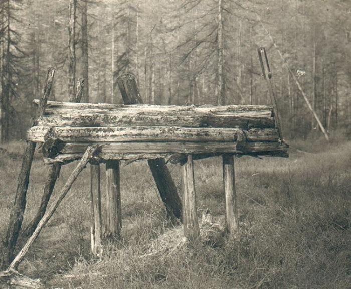 Арангас в лесу.