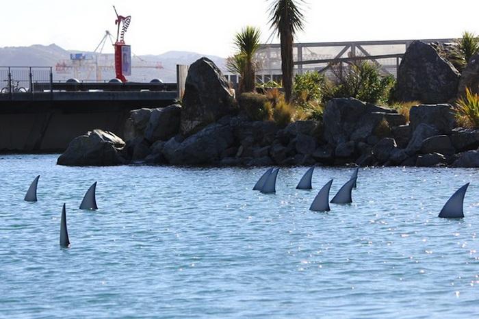 99 серых акульих плавников символизируют страны, отказавшиеся от ввоза этого деликатеса