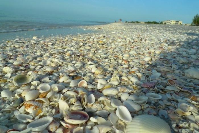 Пляжи, усыпанные ракушками
